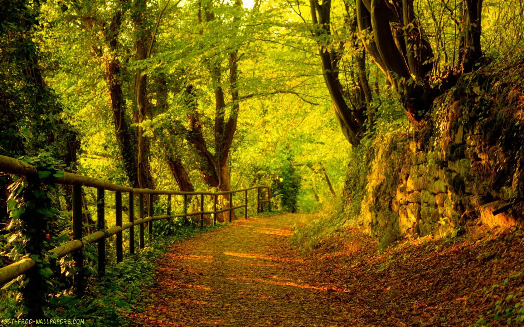 Download Cute View Autumn Wallpaper 1680x1050