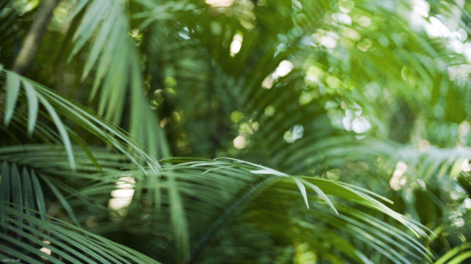 artist photographer iskin tropical plants in a rain forest plantation 1920x1080