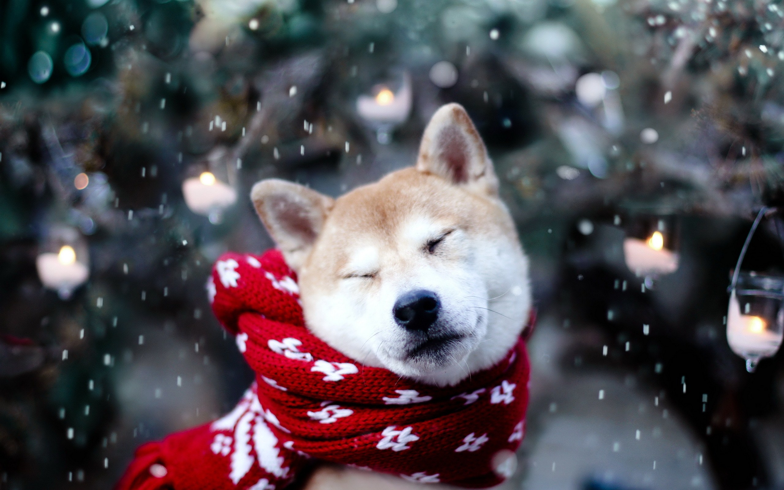 cute dog winter snowflakes animal photos mood wallpaper 2560x1600