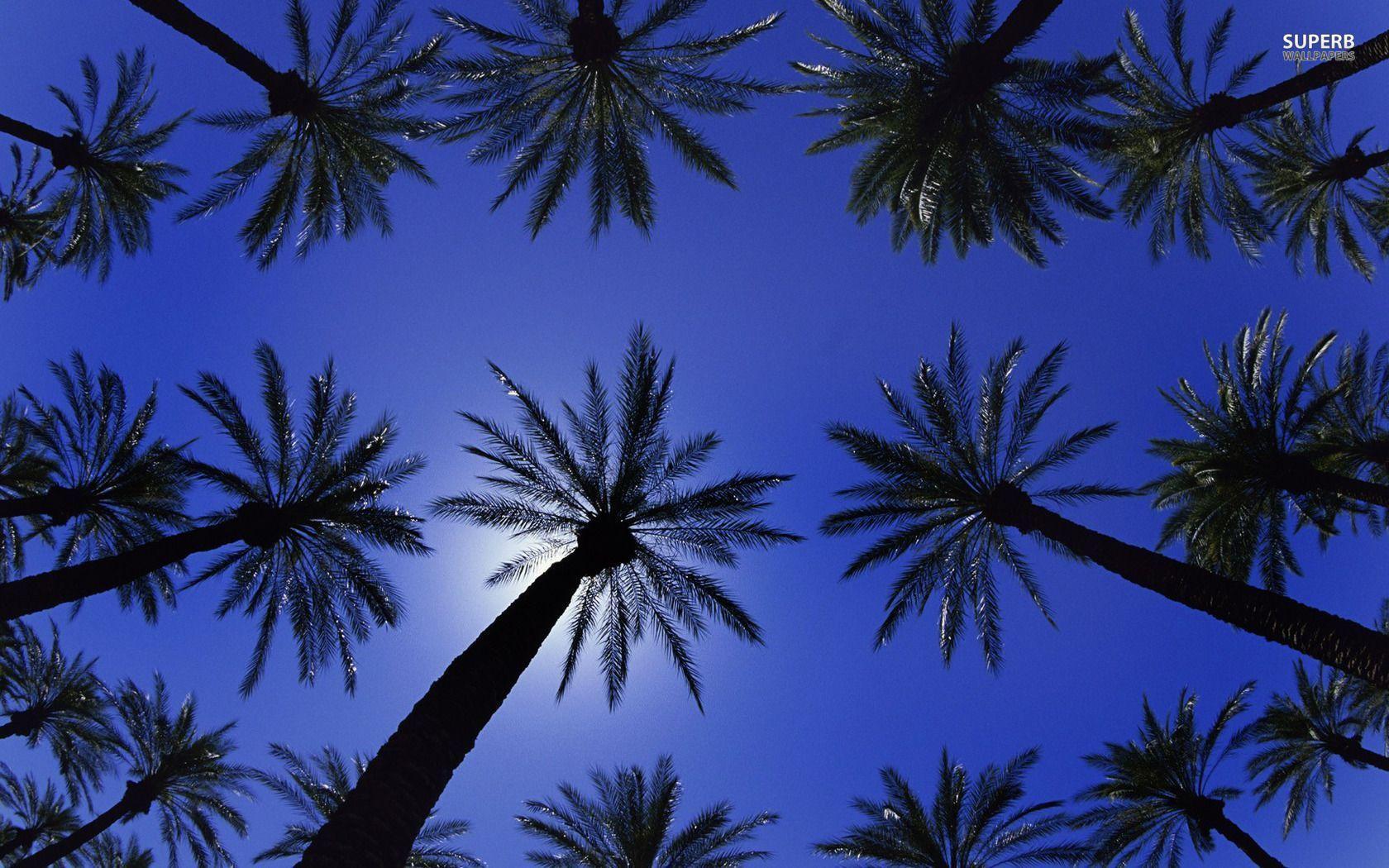 Palm Tree Desktop Wallpapers 1680x1050