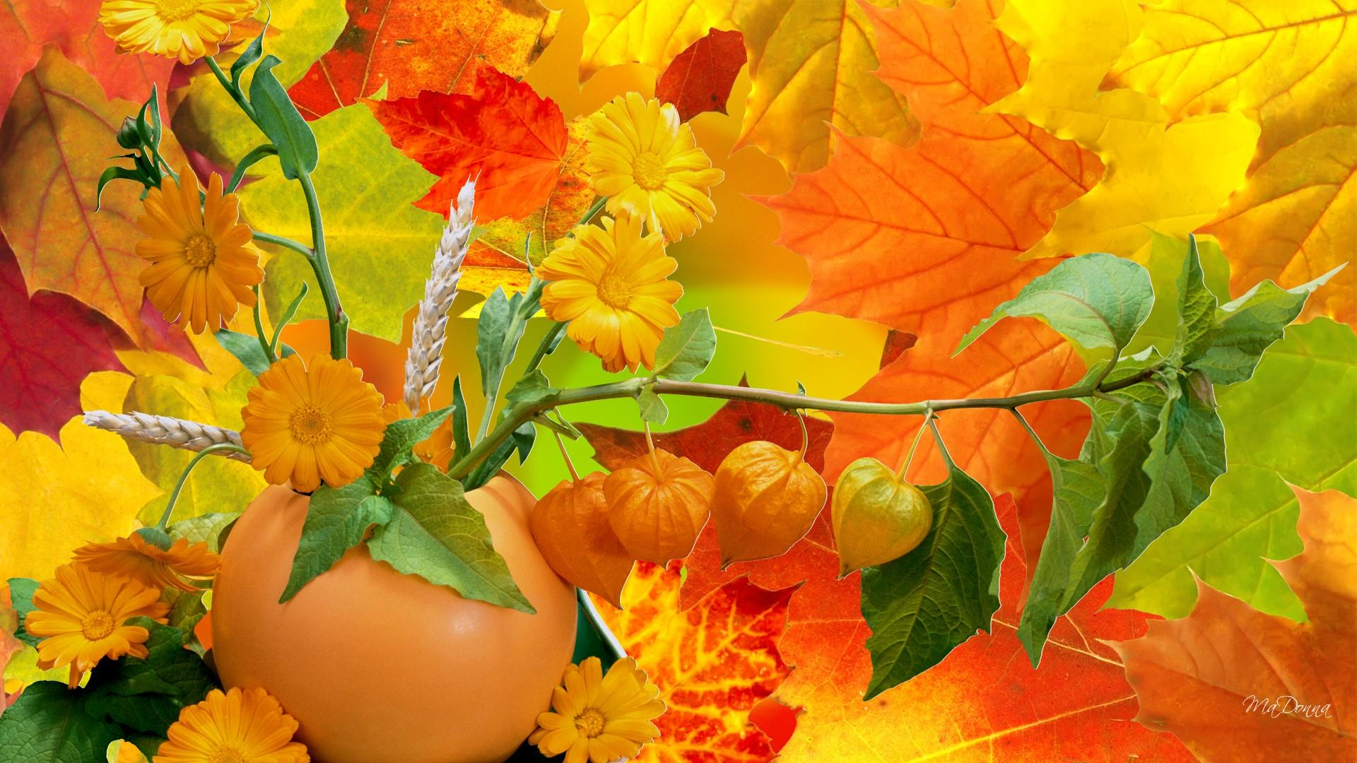 Download Abundance Of Fall Colors High quality wallpaper