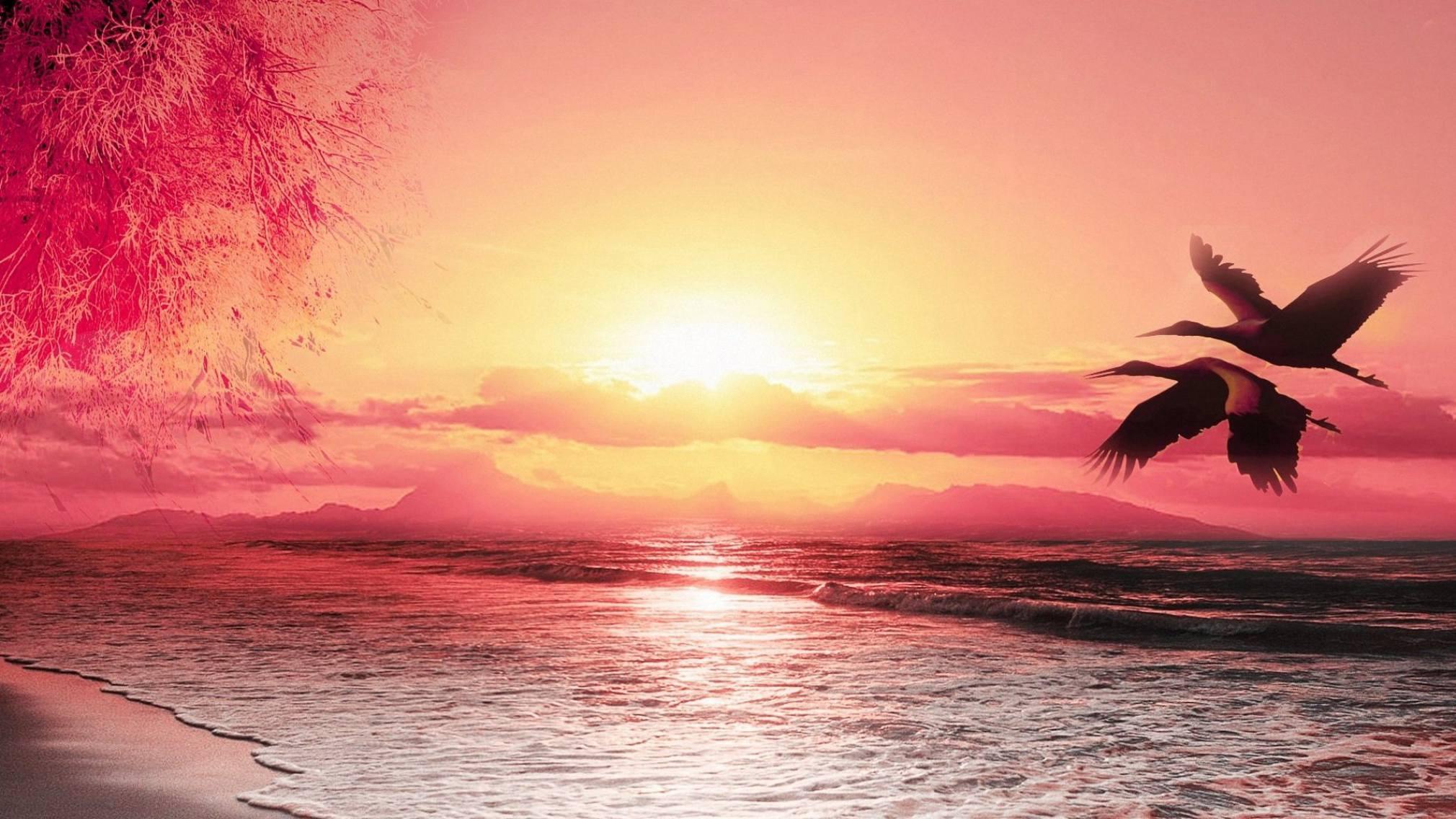 Beautiful seabirds beach sunset Scenery wallpaper material Wallpaper 2020x1136