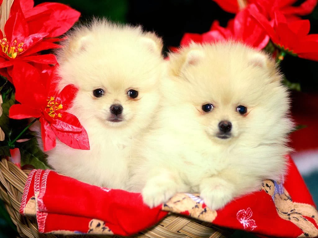 Cute christmas desktop wallpaper   beautiful desktop wallpapers 2014 1024x768