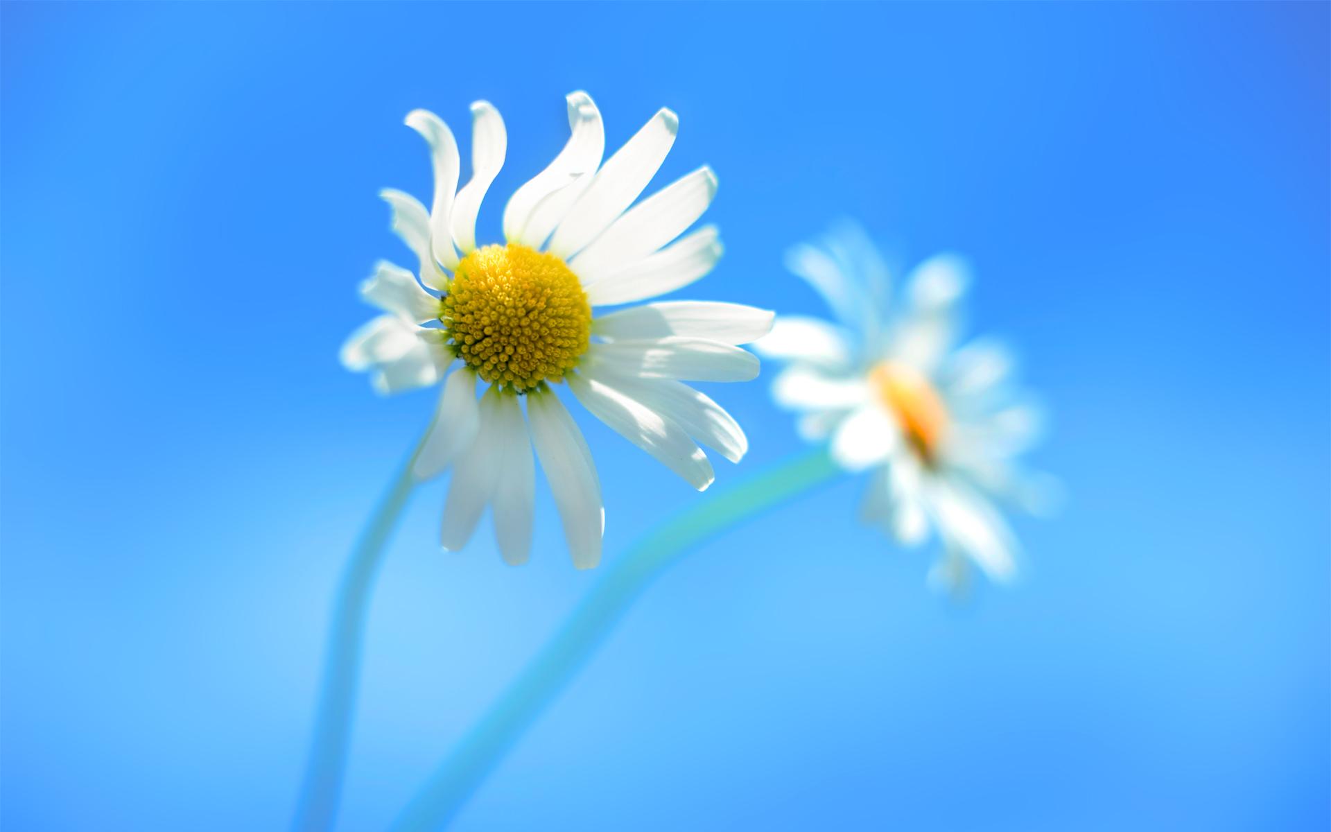 27 Flower Wallpapers For Windows 10 On Wallpapersafari