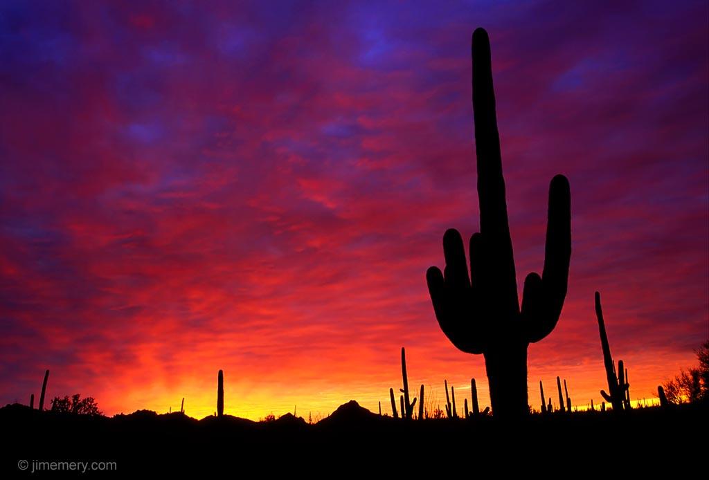 Giant Saguaro silhouette in the Sonoran Desert near Tucson Arizona 1024x694