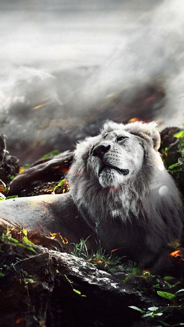 Jungle Lion Wallpaper   iPhone Wallpapers 640x1136