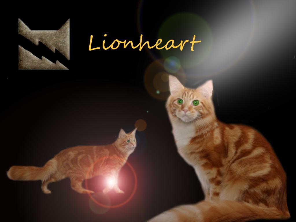 Warrior Cats Cat Desktop Backgrounds Os Hd Able Desktop 1024x768