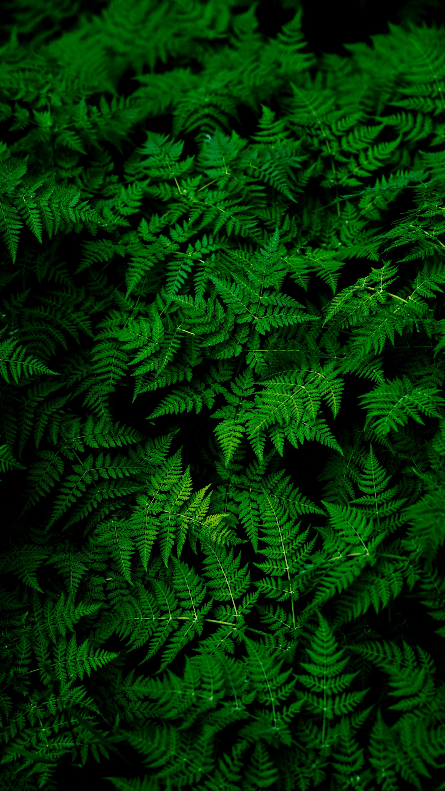 Free Download Download Wallpaper 1440x2560 Leaves Plant