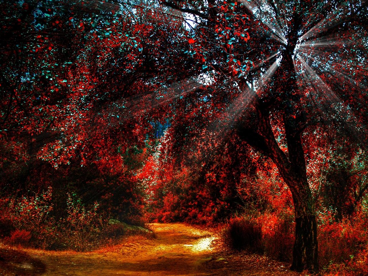 Tumblr Backgrounds Fall Autumn leaves fall 1280x960