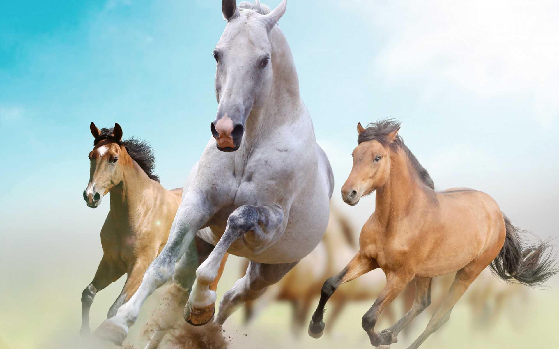 Race Horse Wallpaper - WallpaperSafari