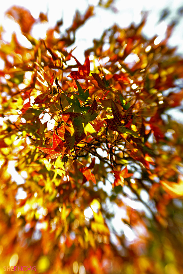 Fall Leaves Iphone Wallpaper Images Pictures   Becuo 640x960