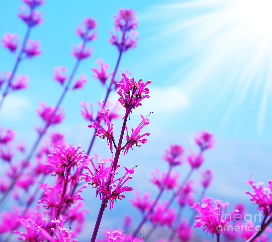 Spring Flower Background by Anna Omelchenko 900x799