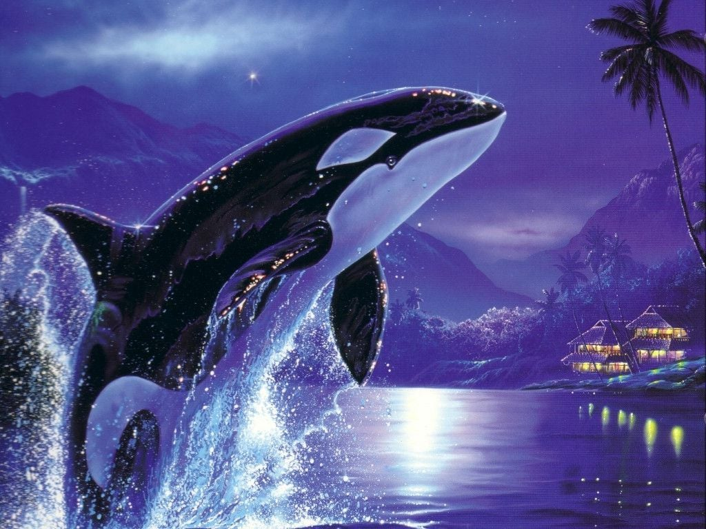 Orca wallpapers wallpapersafari orca killer whale hd wallpapers download 1024x768 thecheapjerseys Images