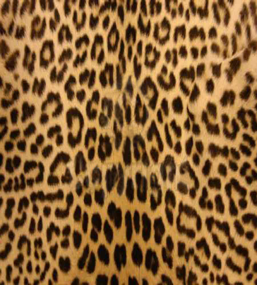 Leopard Print Iphone Wallpaper: Leopard Background