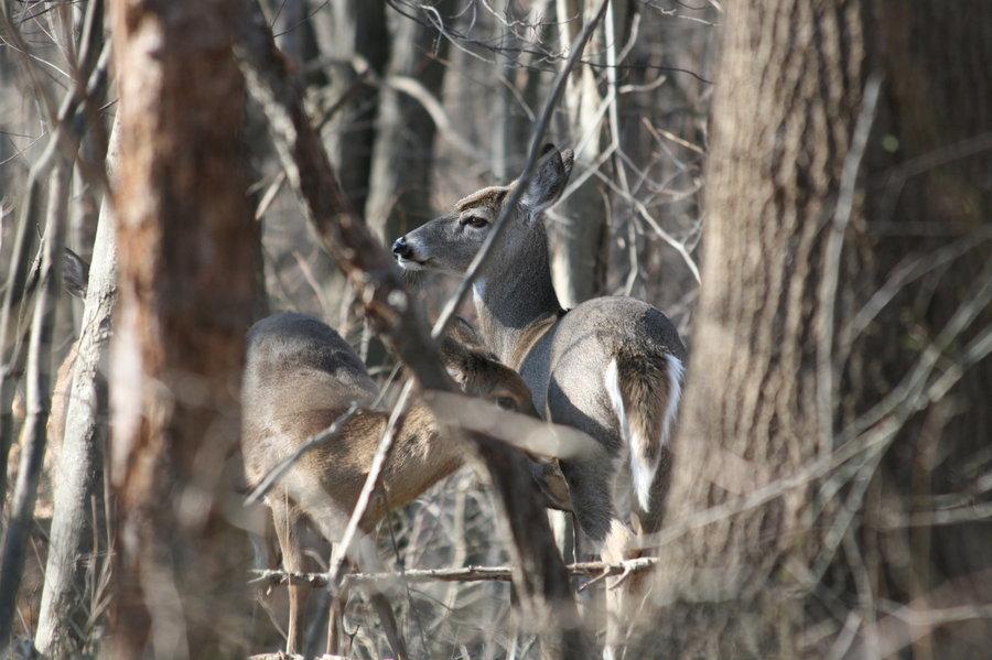 camo john deere logo on pink camo deer skull camo camo with a deer 900x599