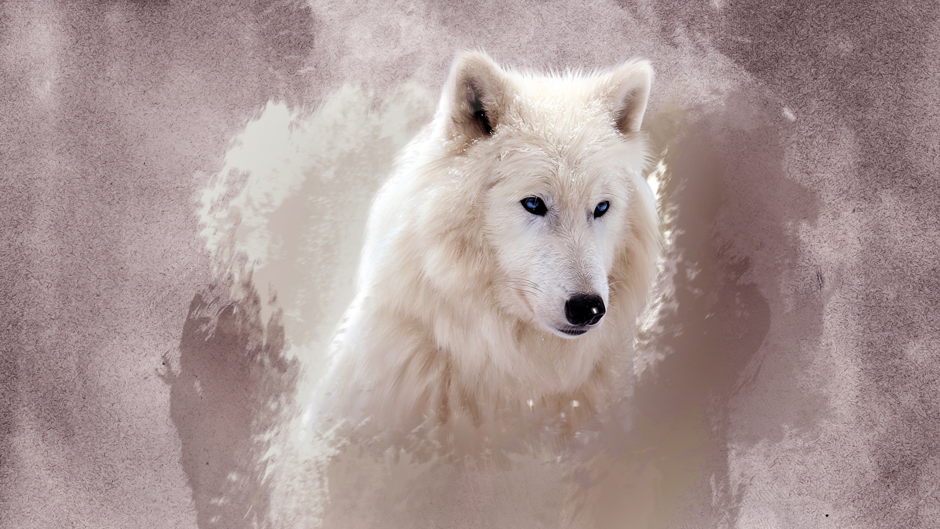 The Wolf Wallpapers HD Wallpapers 1920x1080