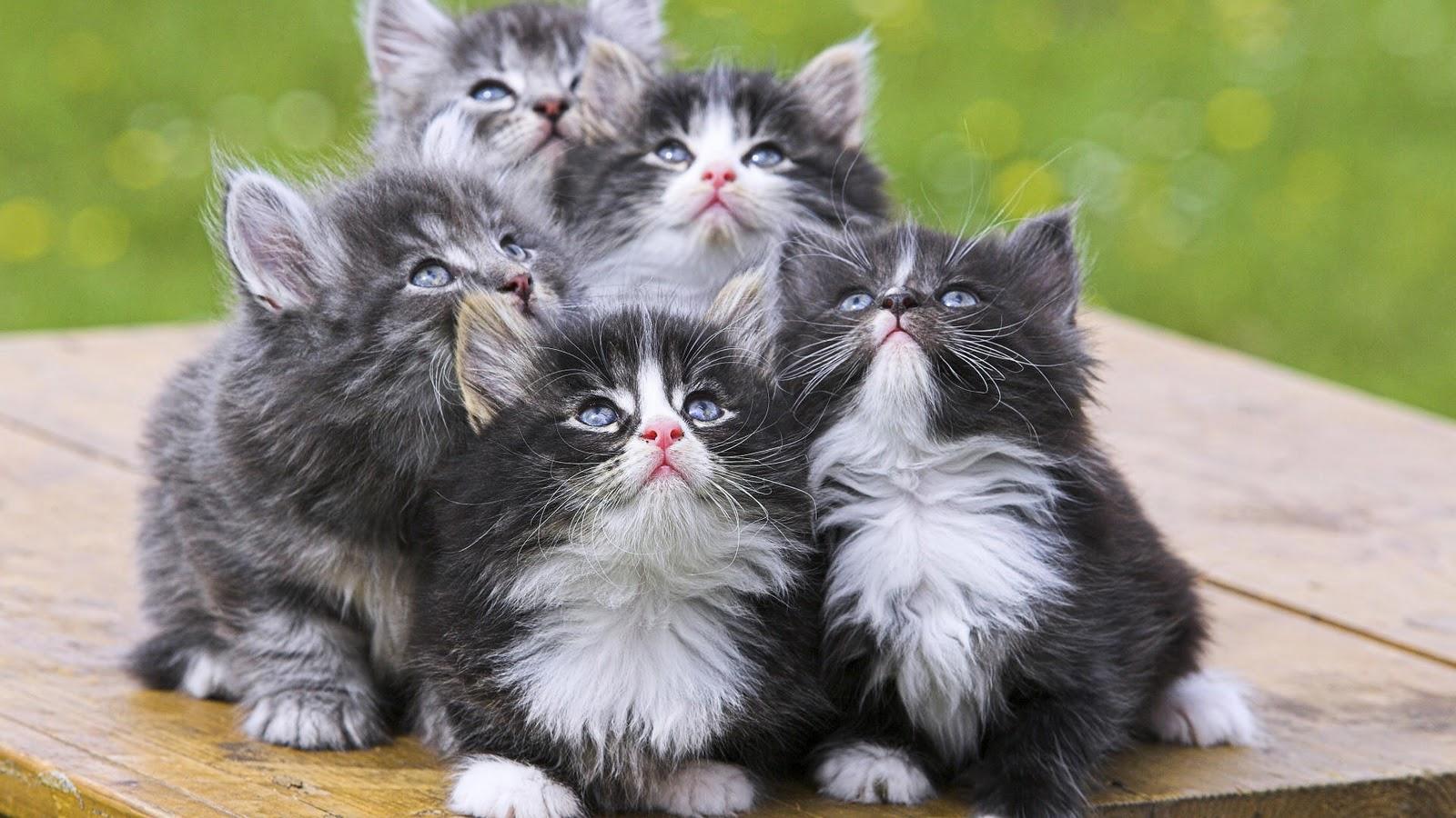 Kitten achtergronden jonge katjes hd kittens wallpapers foto 2jpg 1600x900