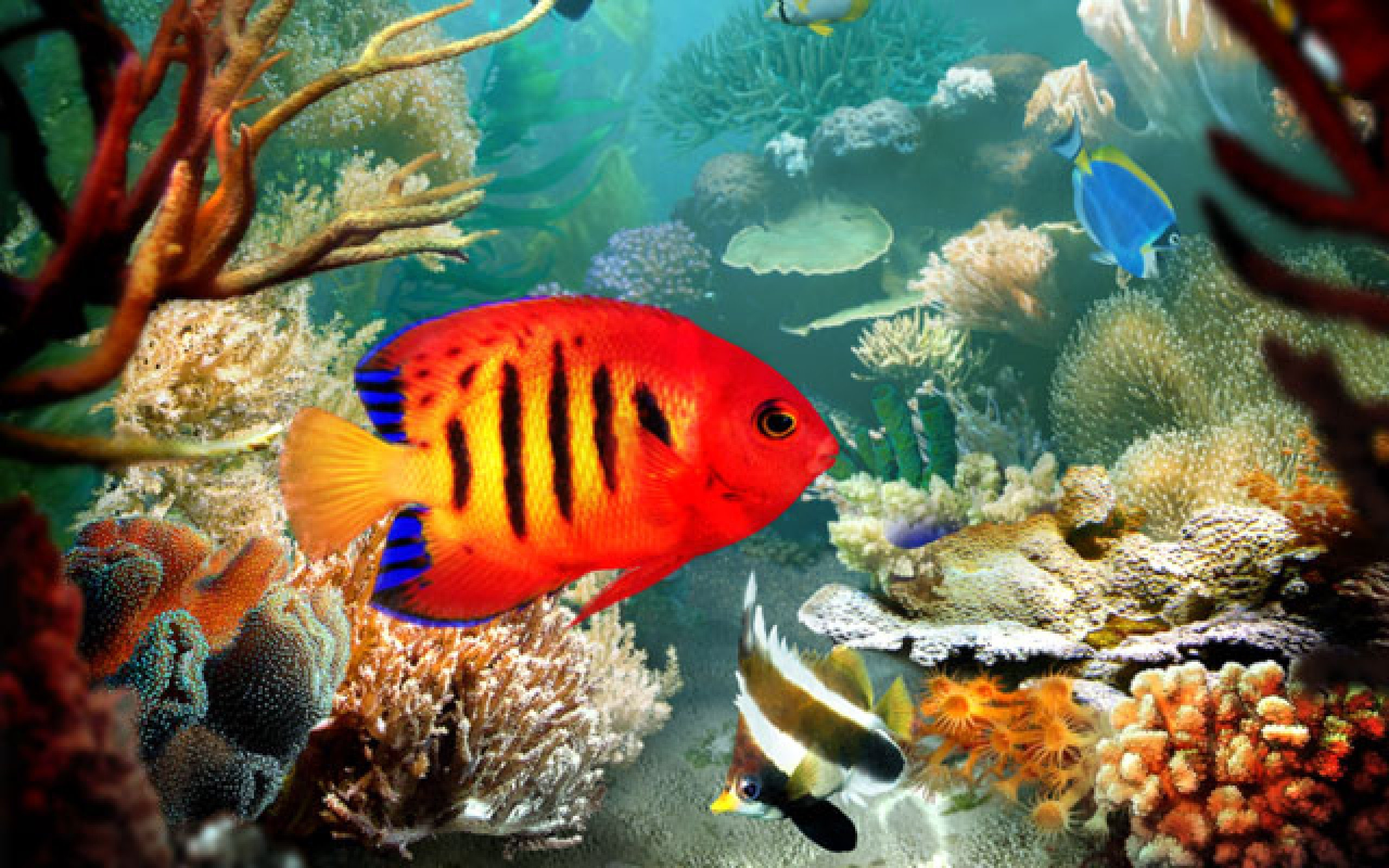 3d tropical fish desktop wallpapers wallpapersafari for 3d fish wallpaper
