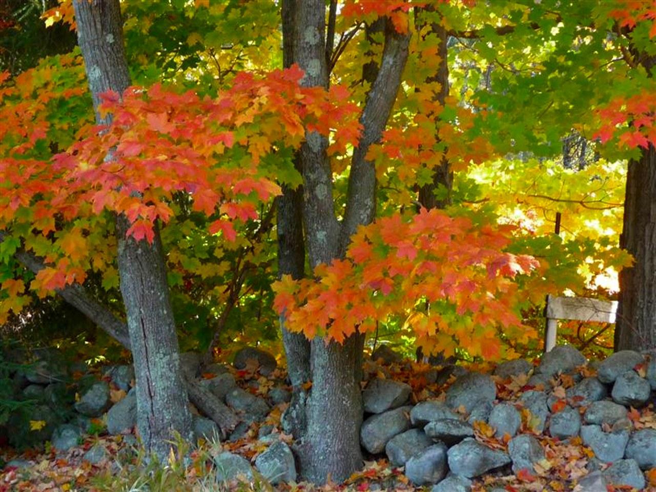 Autumn Scenes Wallpaper   wwwwallpapers in hdcom 1280x960