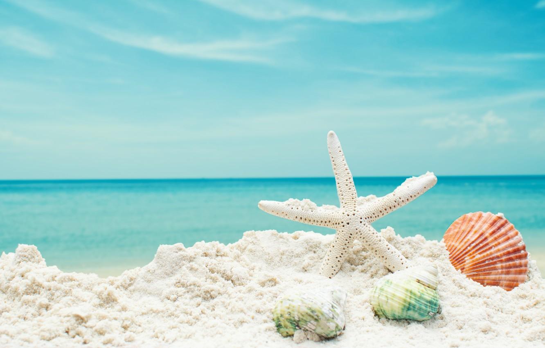 Wallpaper sand sea beach star shell summer beach sea blue 1332x850