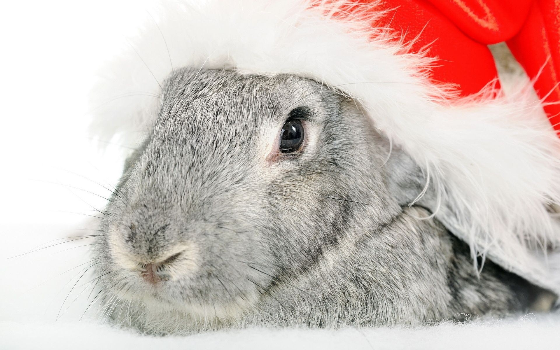 Christmas Rabbit Wallpaper HD Wallpapers 1920x1200