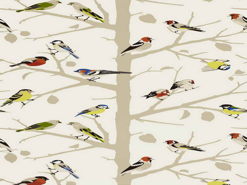 Bird Wallpaper For Walls Powder Room Bird Wallpaper For Walls Decor 800x600