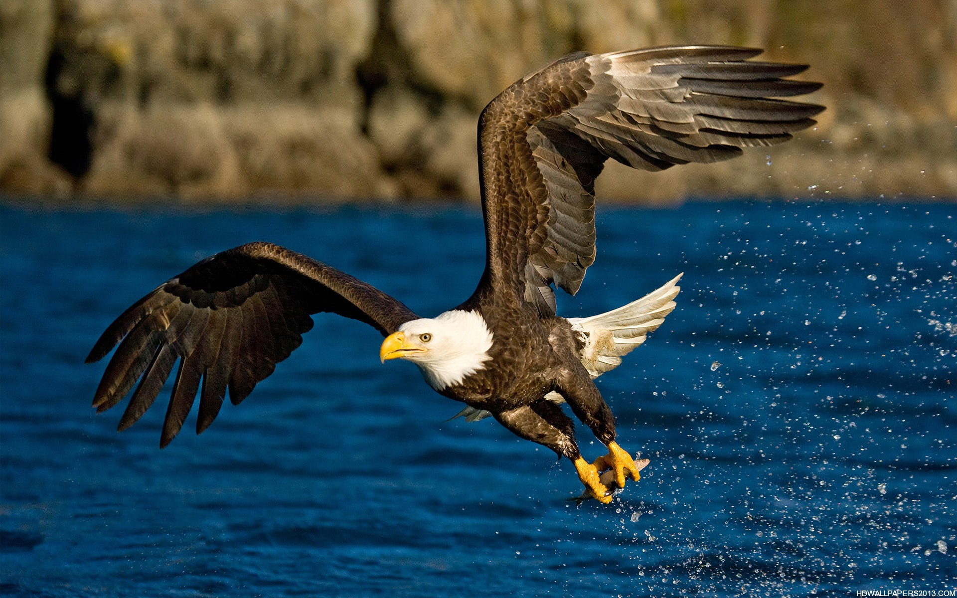 Eagle Flying Wallpaper High Definition Wallpapers High 1920x1200