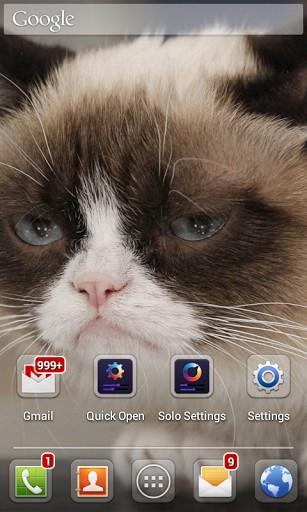 Grumpy Cat Iphone Wallpaper View bigger   grumpy cat 307x512
