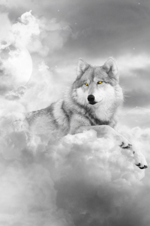 white wolf wallpaper iphone - photo #6