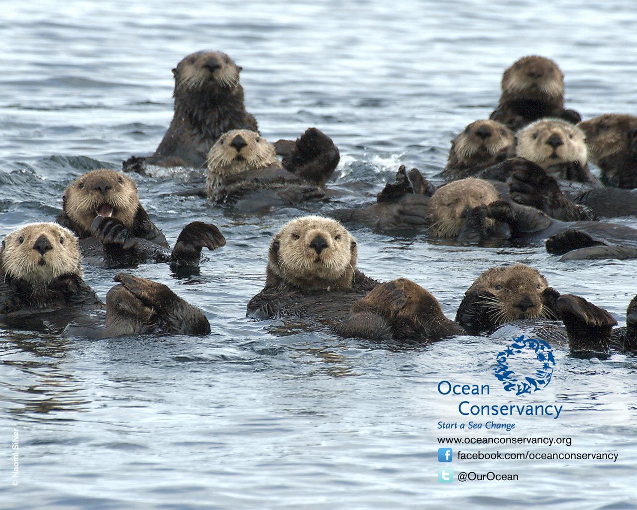 Otter Wallpaper Related Keywords Suggestions   Otter Wallpaper Long 1280x1024