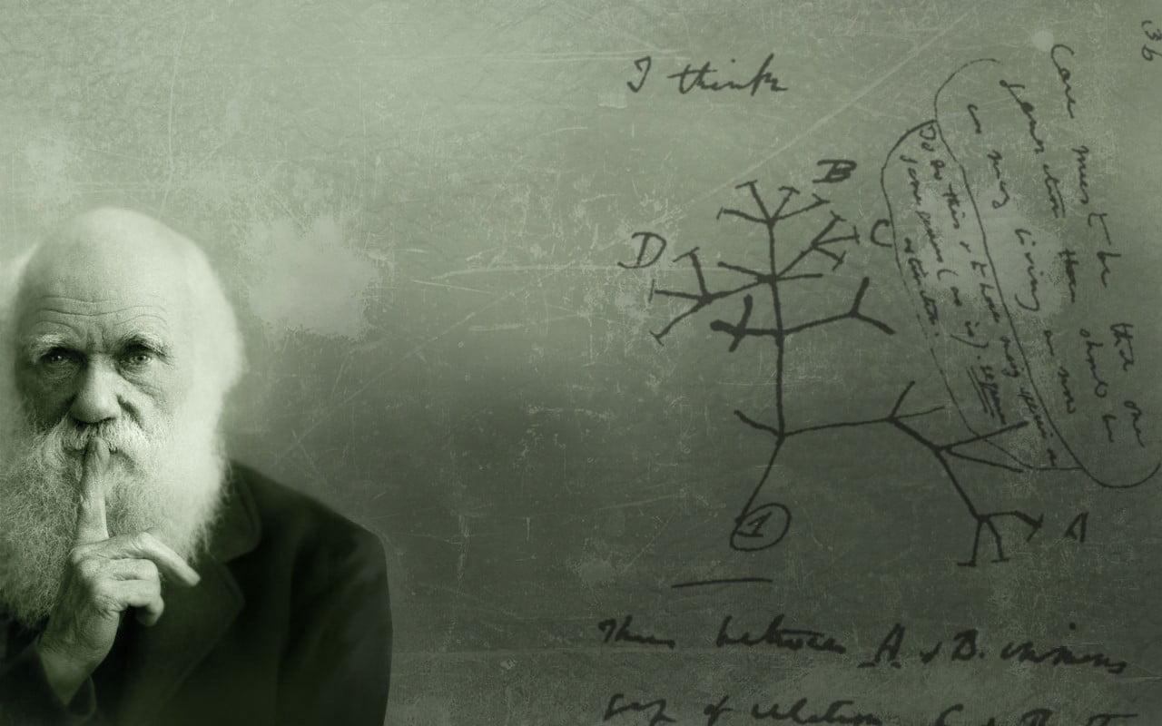 Bearded man photo Charles Darwin HD wallpaper Wallpaper Flare 1280x800