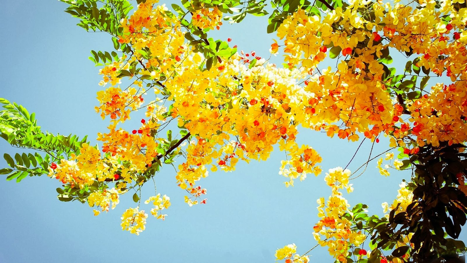 wallpaper and make this Summer flowers wallpaper for your desktop 1600x900