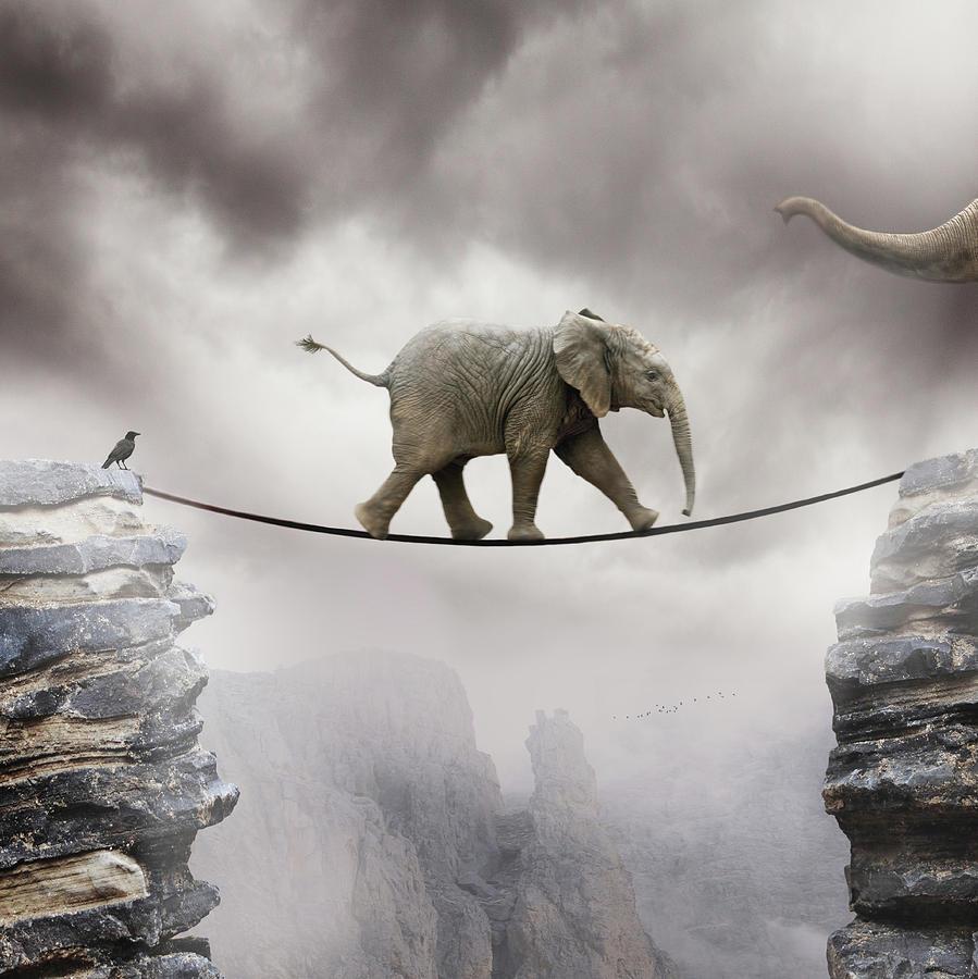 Free baby elephant wallpaper wallpapersafari - Baby elephant wallpaper ...