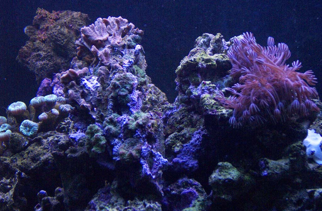 Related Pictures Coral Reef Live Wallpaper Mobile9 Car Pictures 1024x673