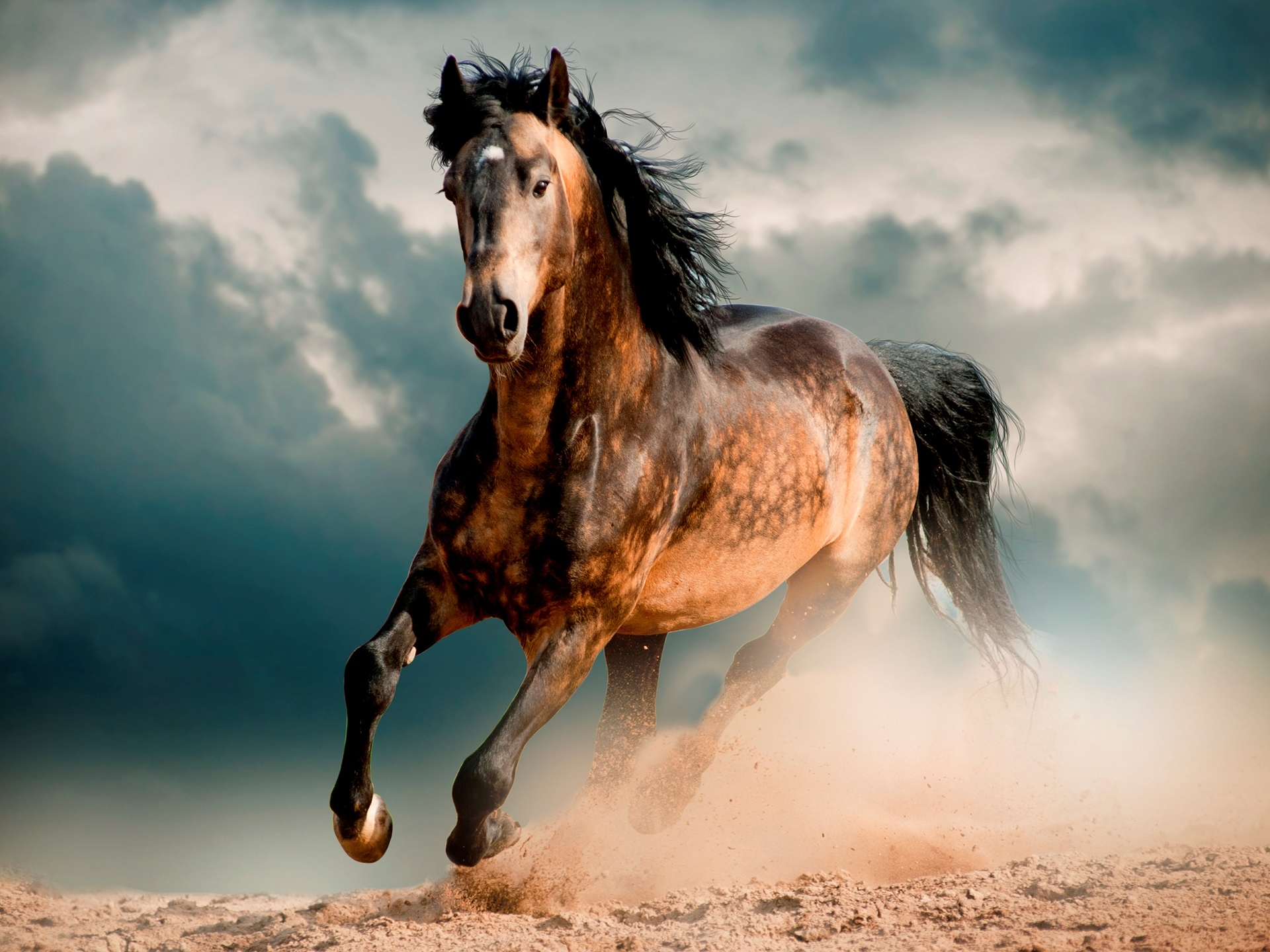 freedom animal dust wind picture sky clouds photo wallpaper 1920x1440