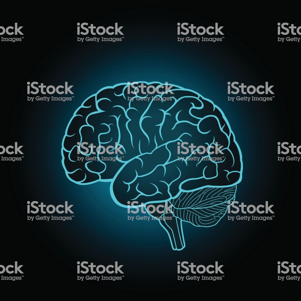 Schematic Illustration Of Human Brain On A Dark Blue Background 1024x1024