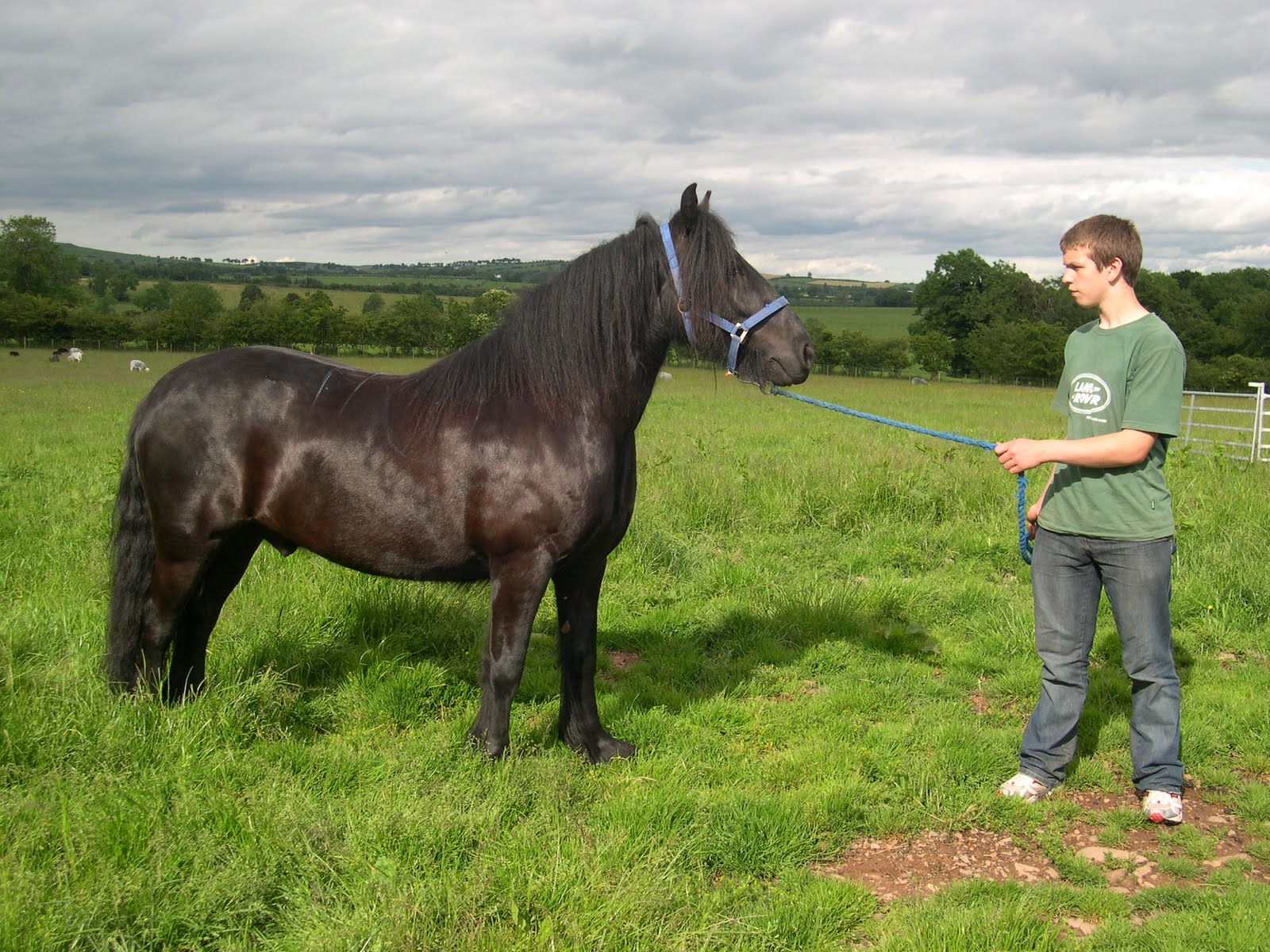 HD Animals Wallpapers Friesian Black Horse Wallpaper 1600x1200