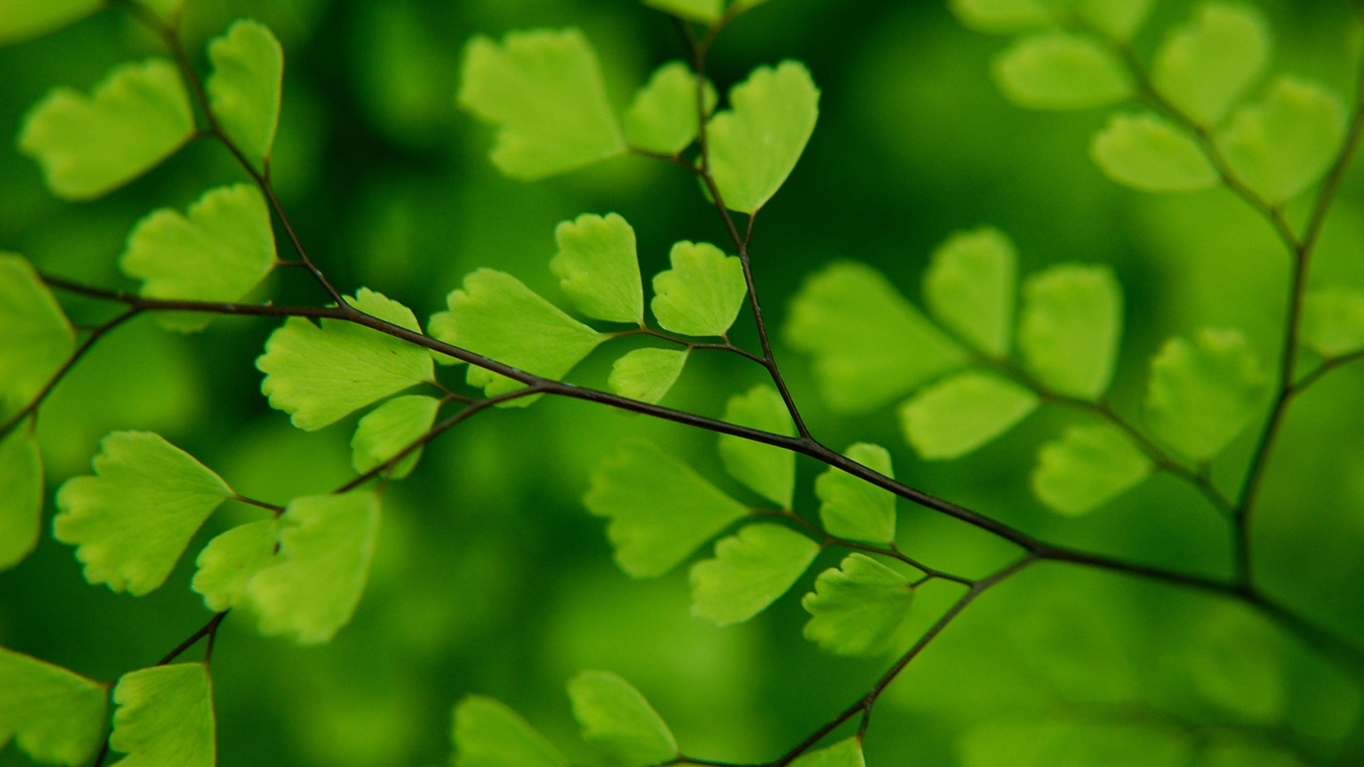Free Download Green Leaves Wallpaper Green Leaves Hd