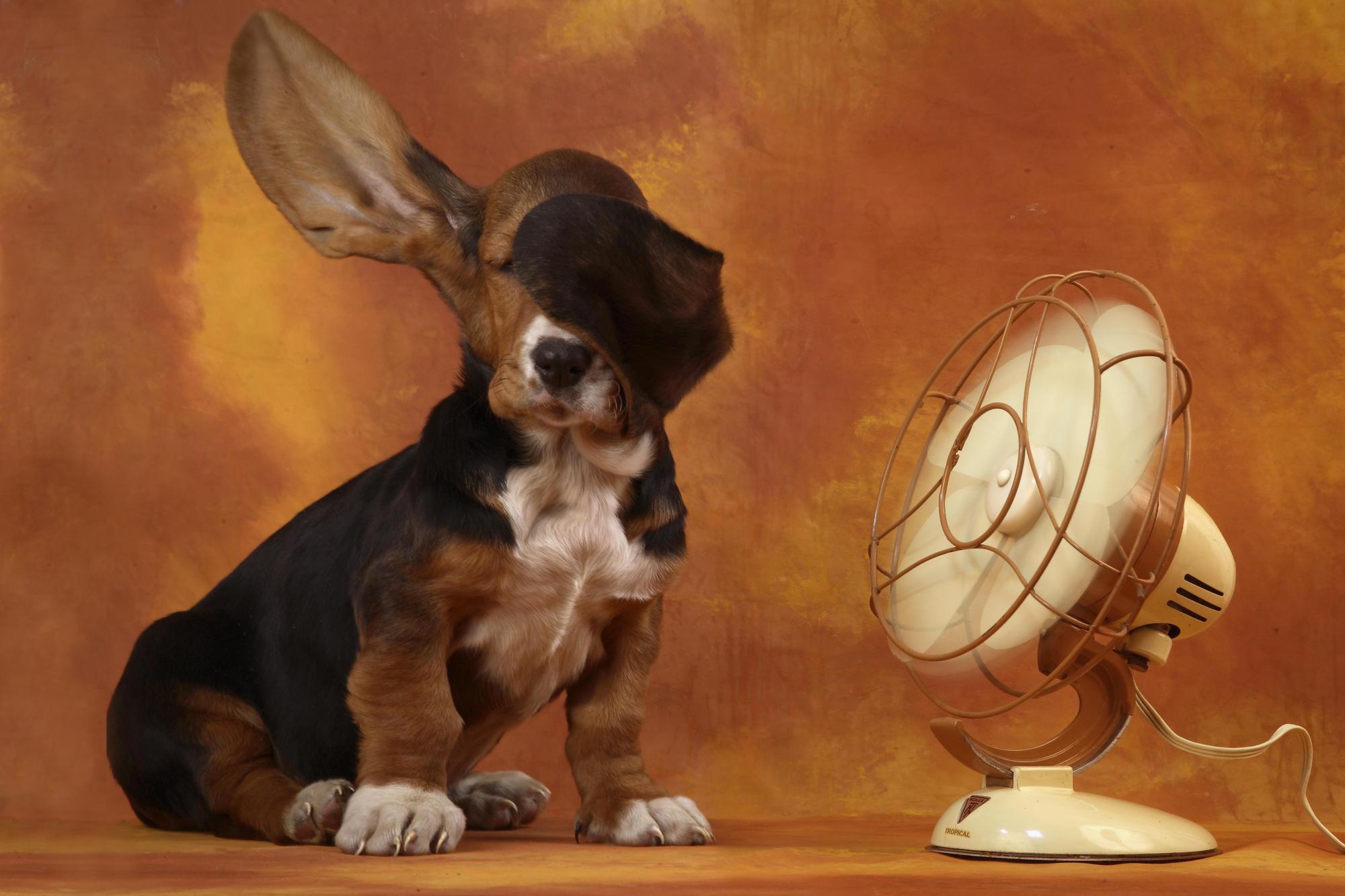 Apple Mac Desktop Wallpapers HD Funny Doggy Desktop Cute Apple Animal 2000x1333
