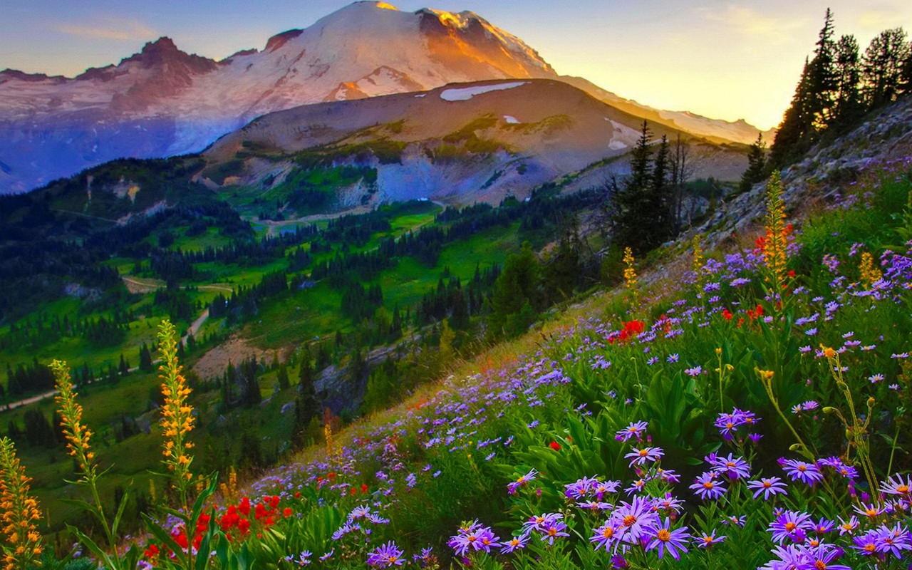 Mount Rainier HD desktop wallpaper Widescreen High 1280x800