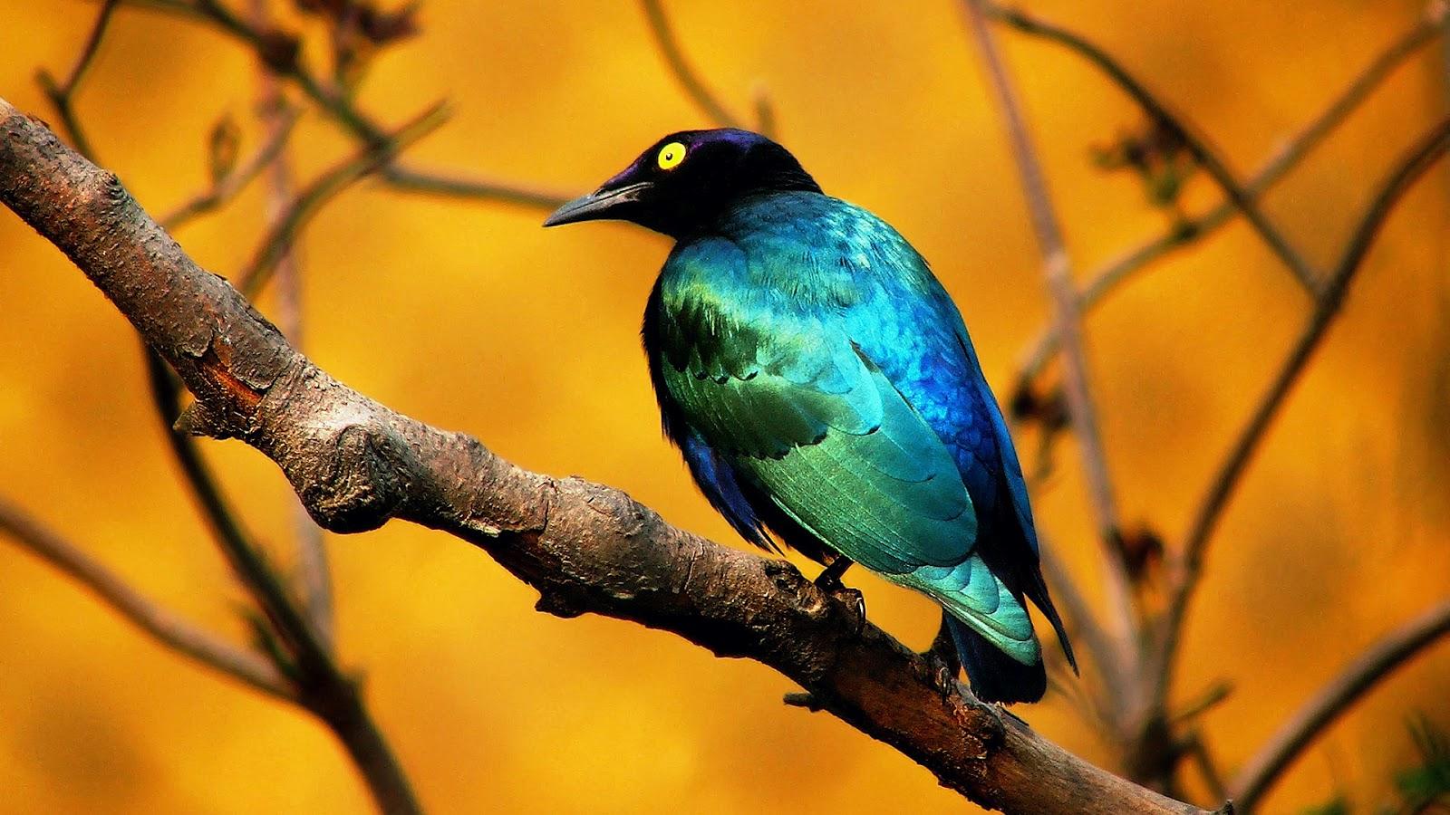 wallpaper beautiful bird wallpaper flying bird wallpaper bird desktop 1600x900