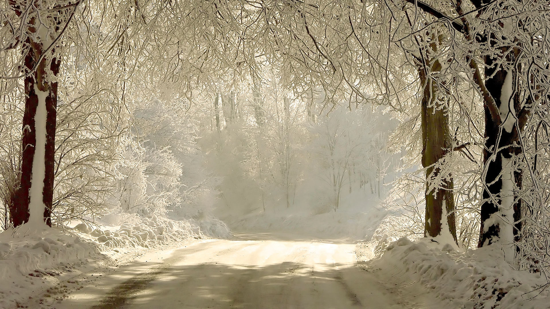 1920x1080 Snowy forest road desktop PC and Mac wallpaper 1920x1080