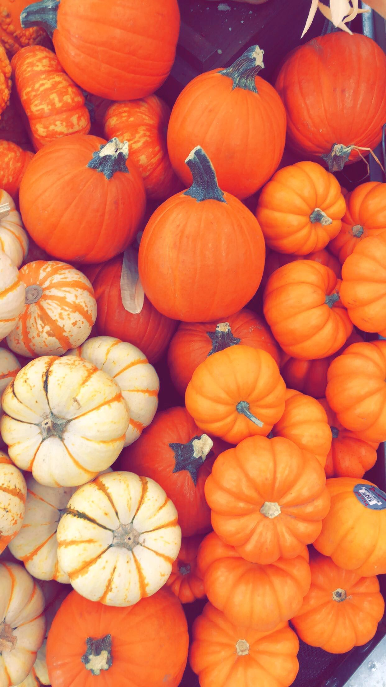 Fall Pumpkin wallpaper Holidays in 2019 Iphone wallpaper fall 1242x2208