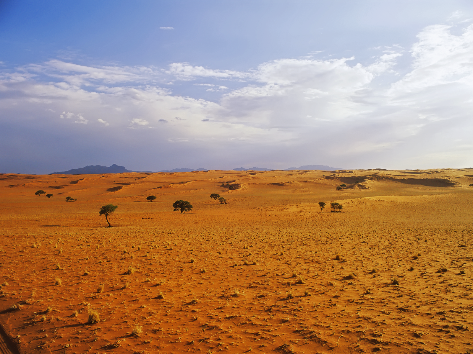 Desert Landscape wallpaper Conservatives Pee Themselves With Joy 1600x1200