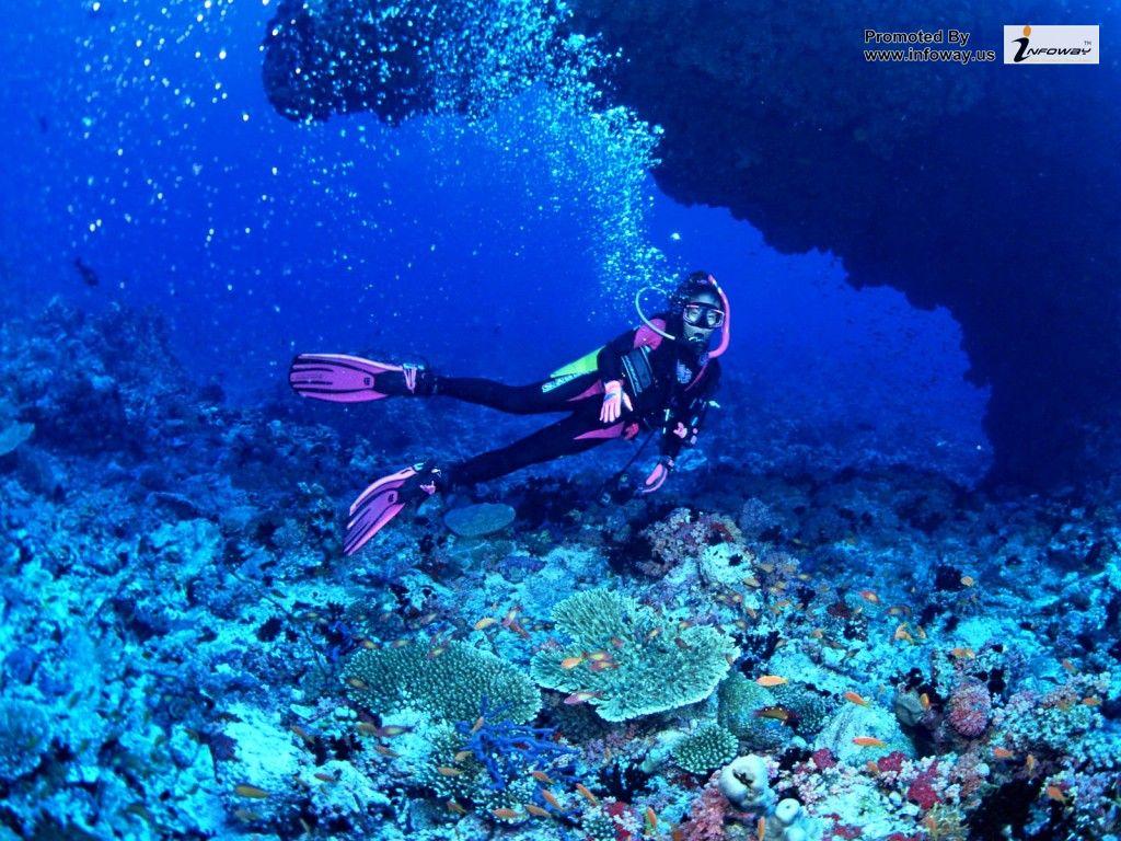 Ocean HD Fish   Photo 220 of 272 phombocom 1024x768
