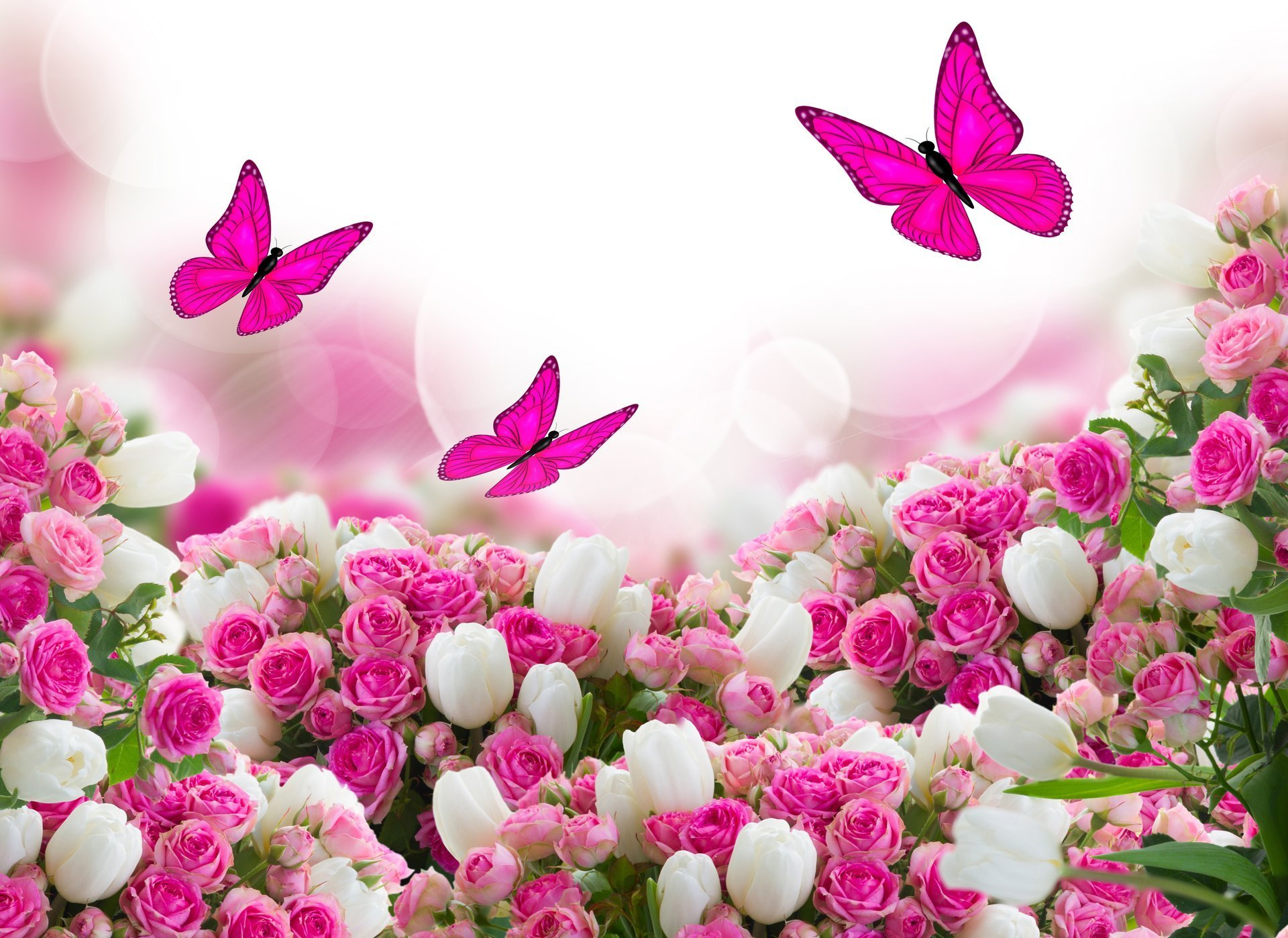 Free Download Roses Tulips Leaves Flower Butterfly Hd Wallpaper