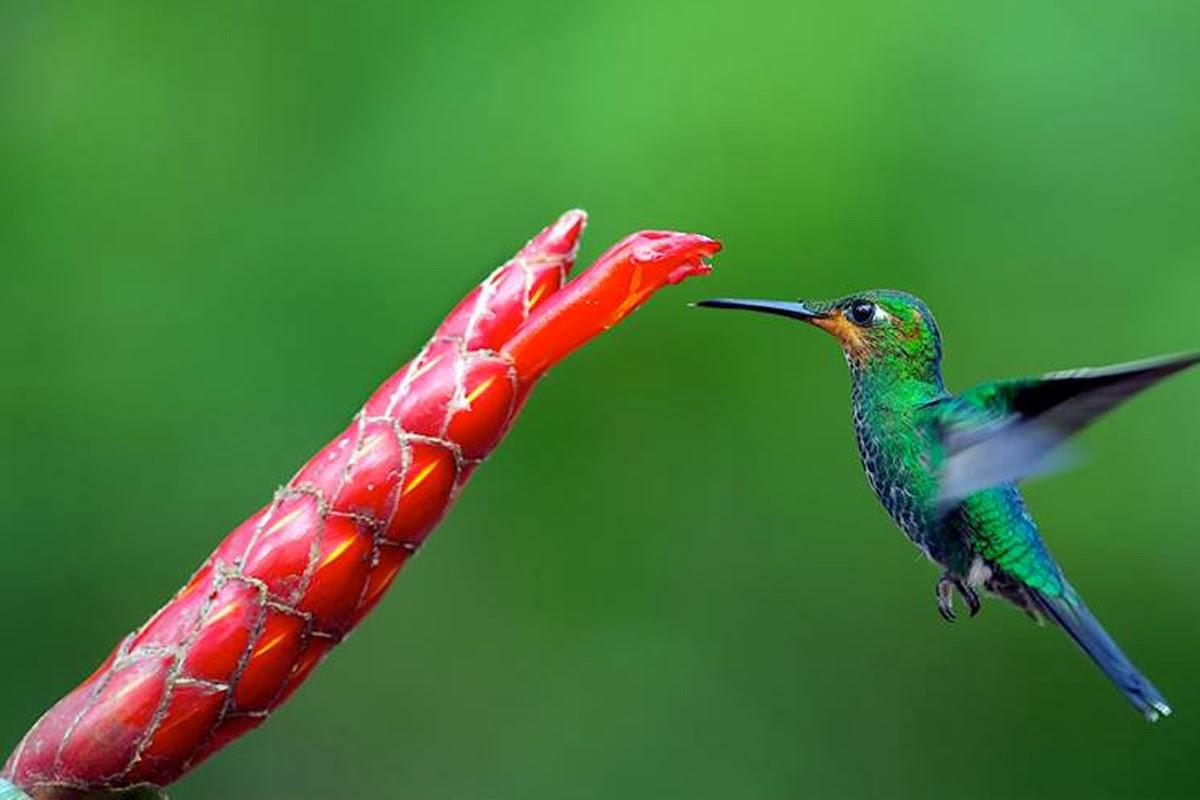 free hummingbird wallpaper and screensaver