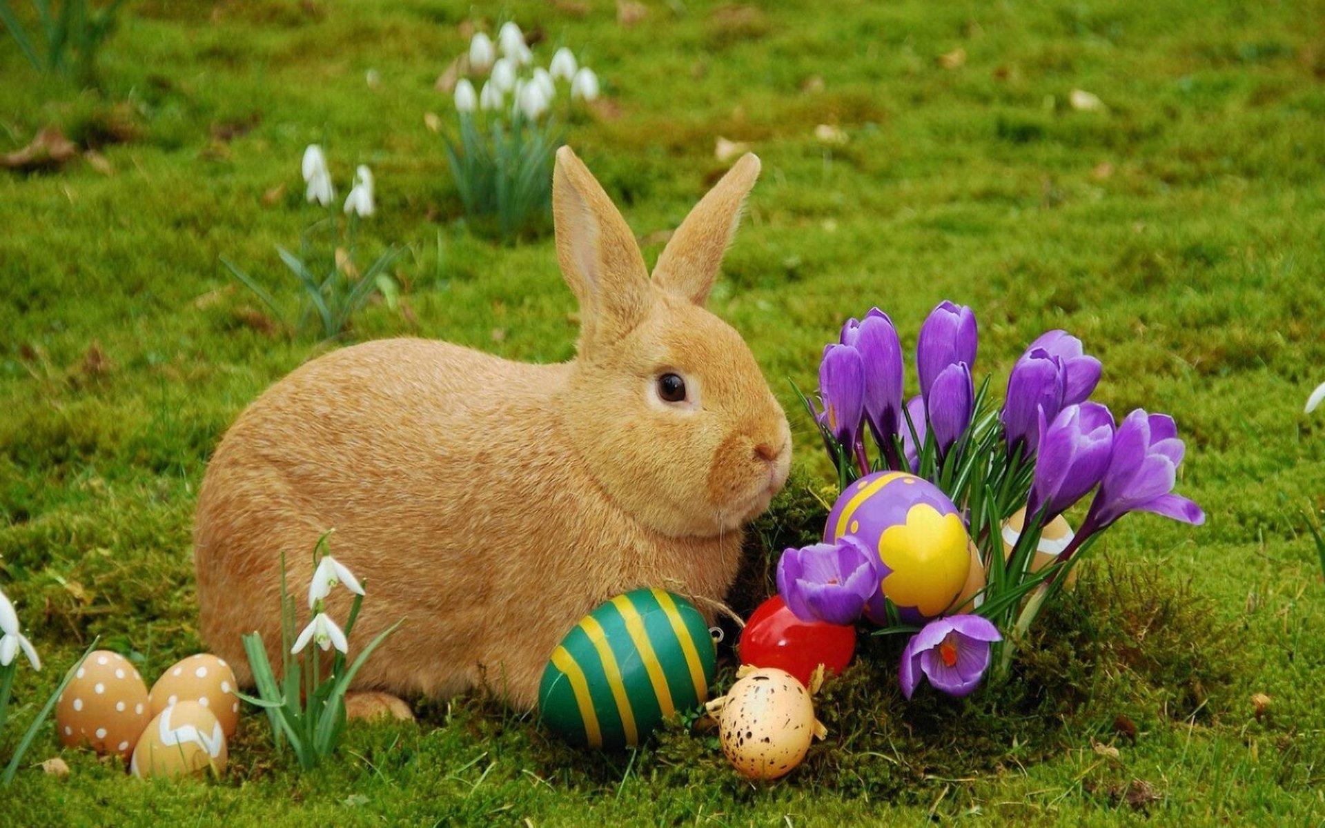 69 easter bunny backgrounds on wallpapersafari - Easter bunny wallpaper ...