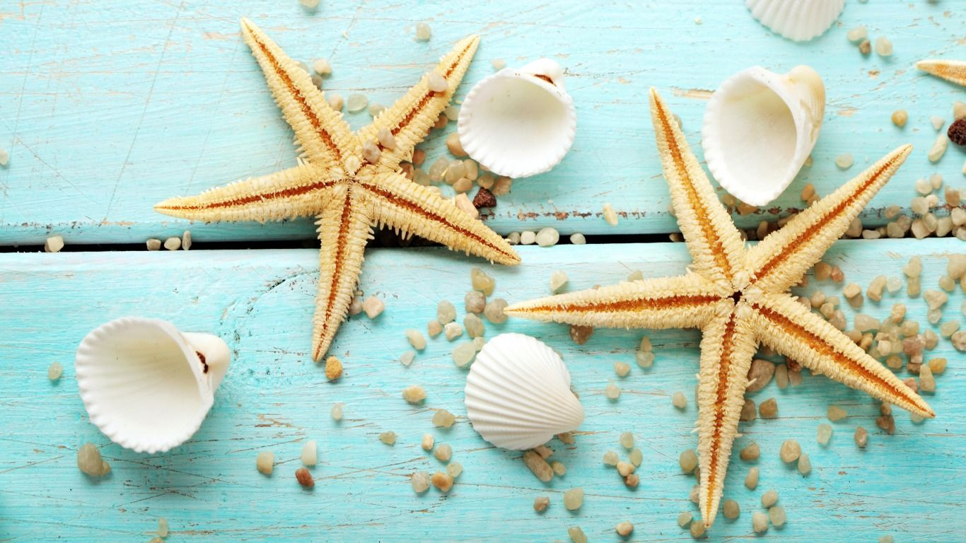 Seashells Wallpaper ENDLESS SUMMER Desktop wallpaper 1920x1080 1366x768