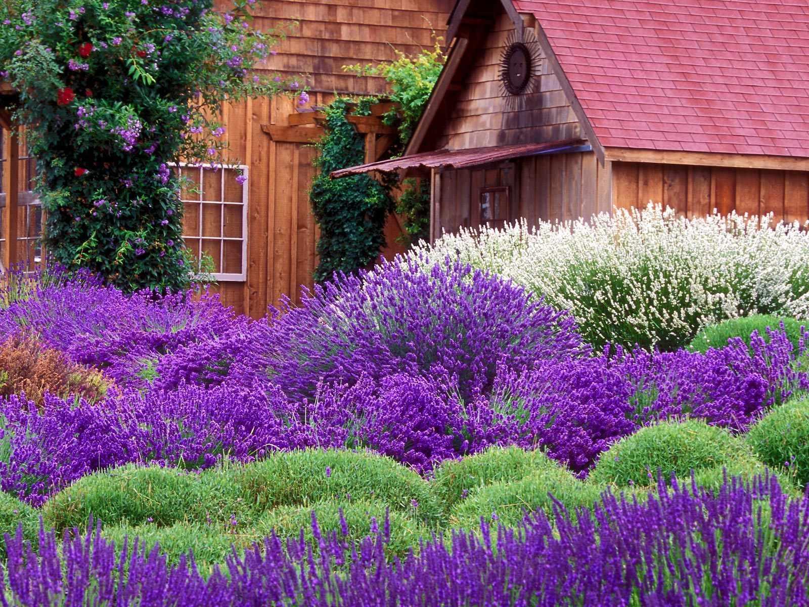 Lavender Cottage Computer Wallpapers Desktop Backgrounds 1600x1200 1600x1200